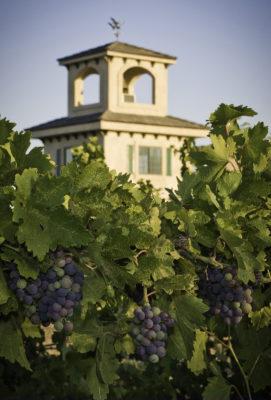 SFW-vineyard
