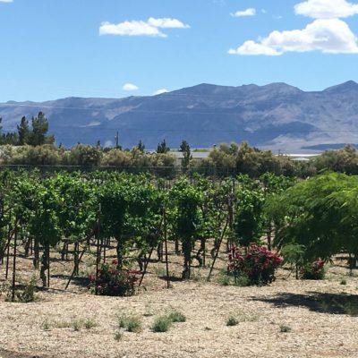 Sanders Winery-21-vineyard