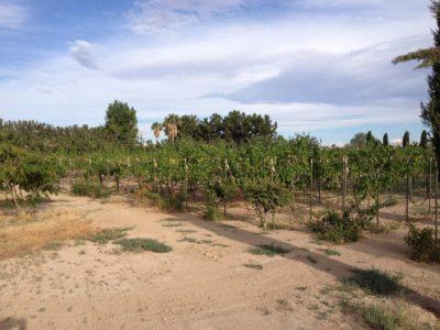 Sanders Winery-23-vineyard